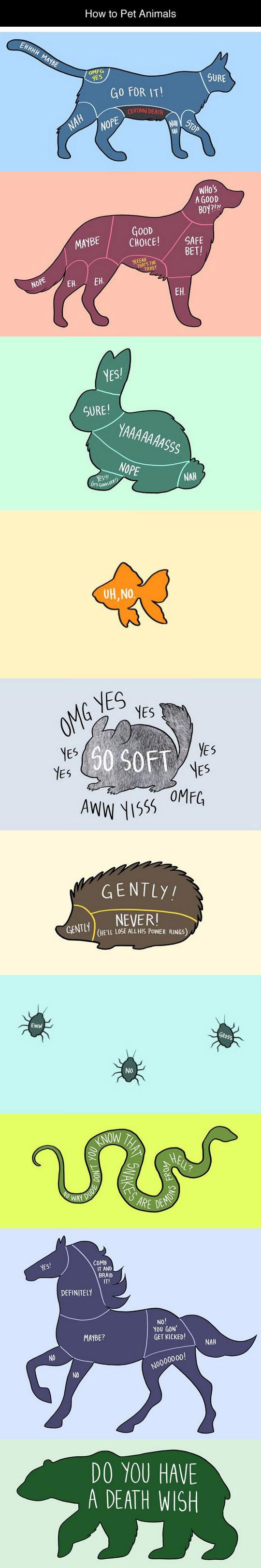 How To Pet Animals