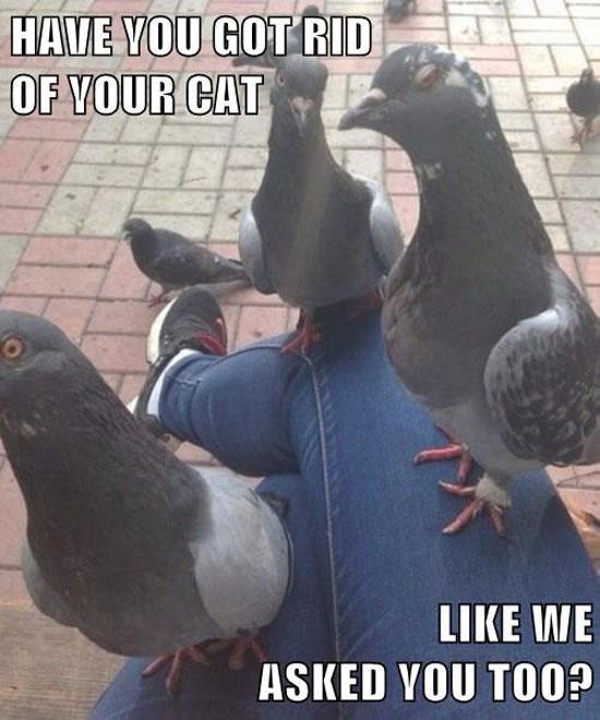 Pigeon Mafia