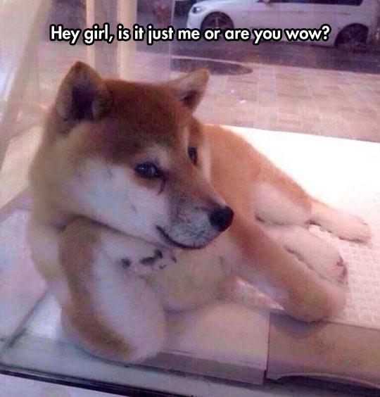 Smooth Doge