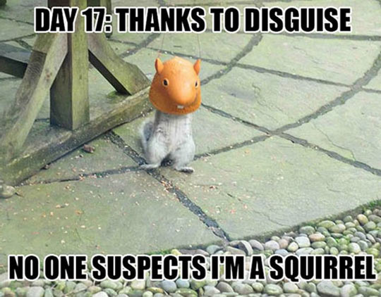 Squirrel In Disguise