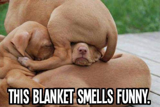 That Isn't A Blanket