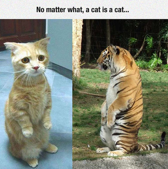 A Cat Is A Cat