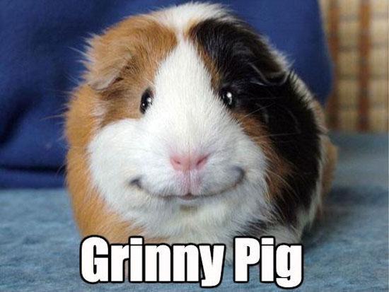 Grinny Pig