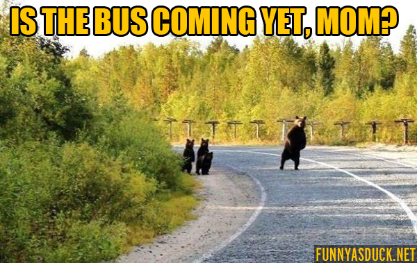 Is The Bus Coming Yet?