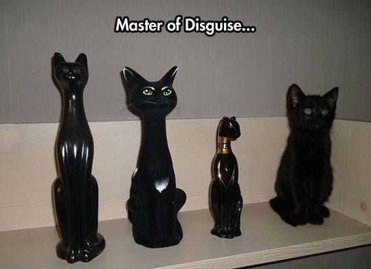 Master Of Disguise