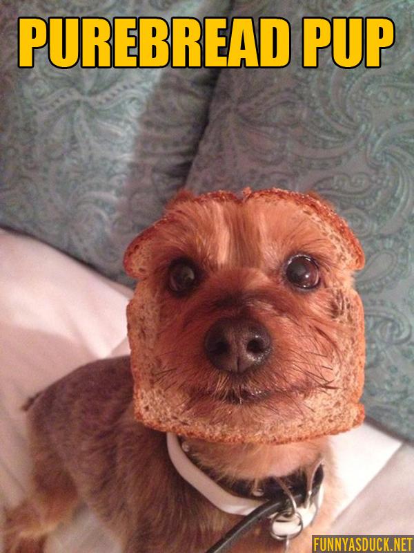 Purebread Pup