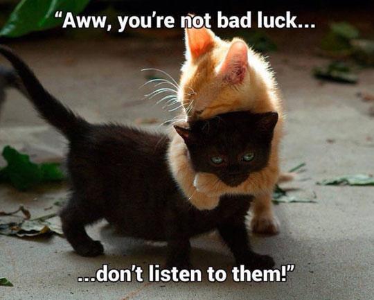 Poor Black Kitty