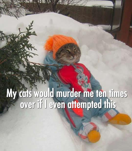 Snowsuit Cat