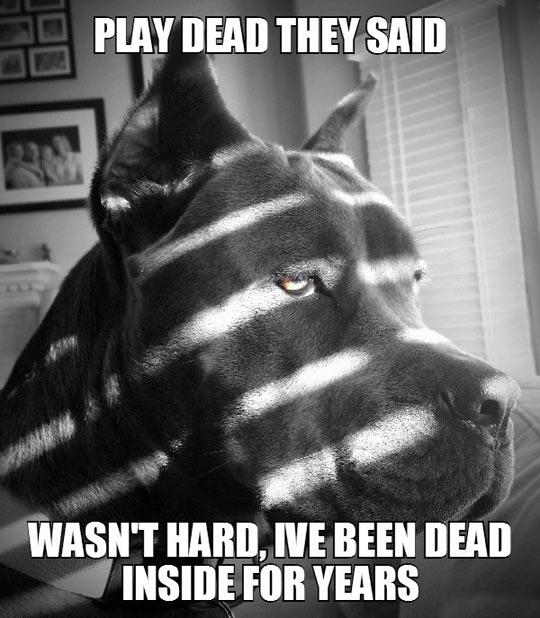 Melodramatic Dog