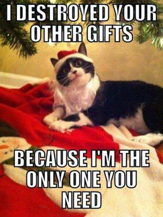 Thanks, Cat