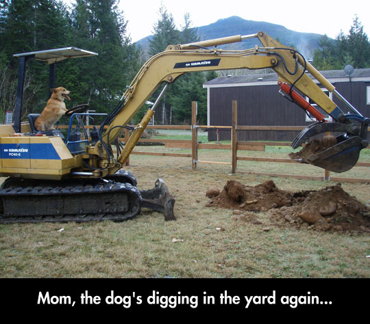 The Dog Is Digging