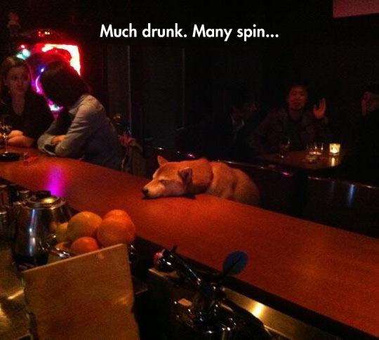 Much Drink
