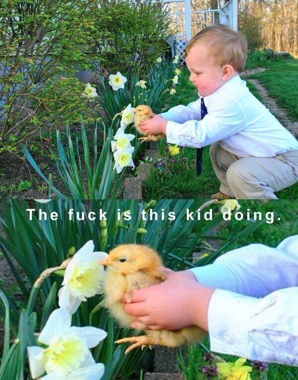 Picking Up Chicks