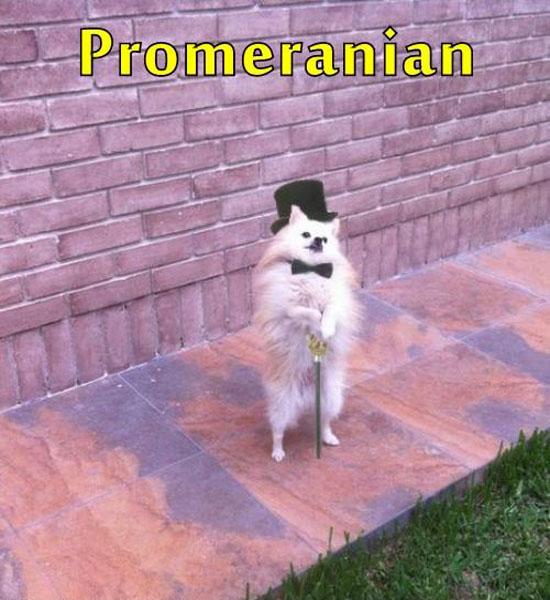 Promeranian
