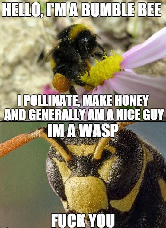 Bumble Bee Vs Wasp