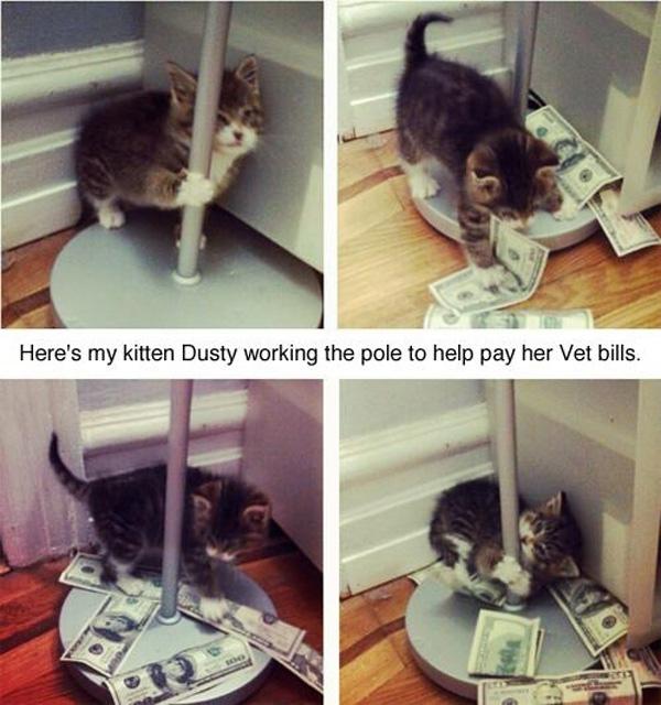 Kitten Pole