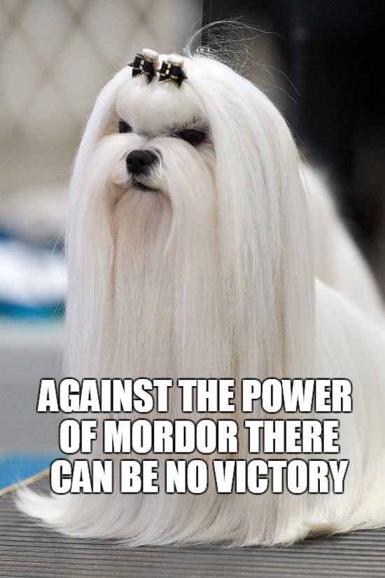 The Power Of Mordor