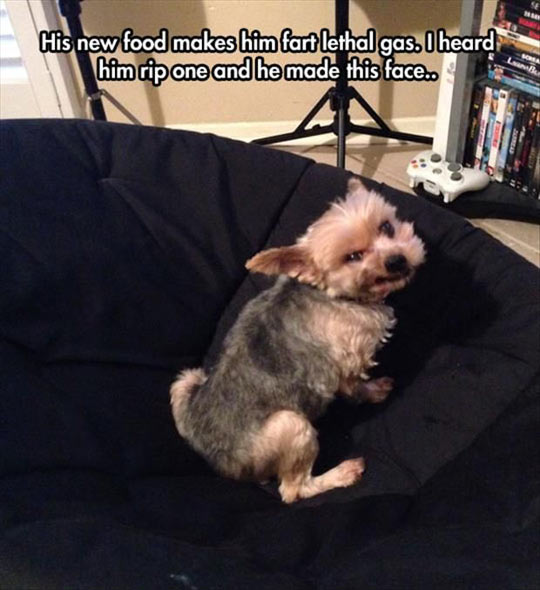 Dog Farted