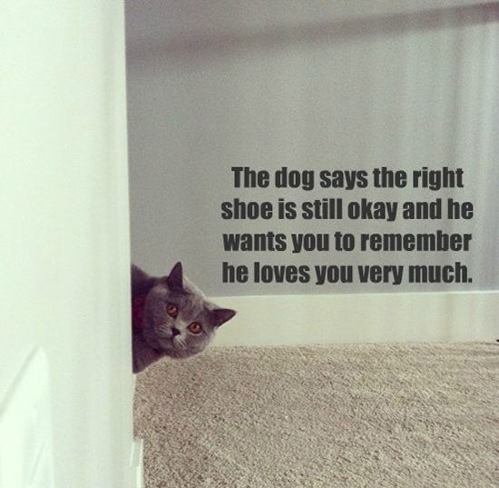 The Dog Loves You