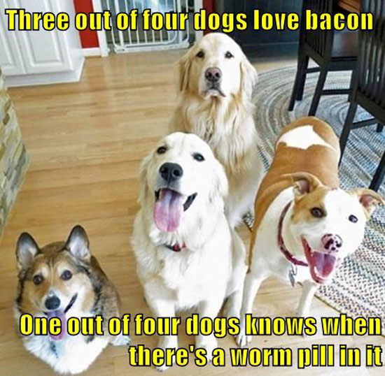 Dogs Love Bacon