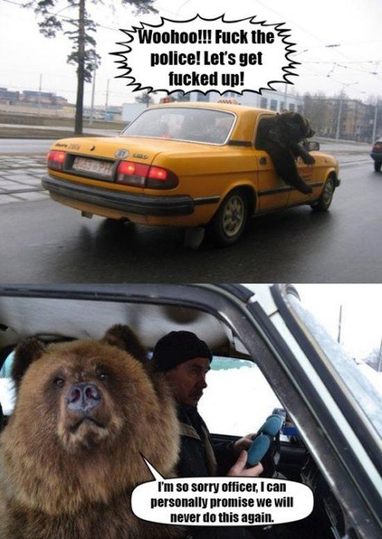 Drunk Bear
