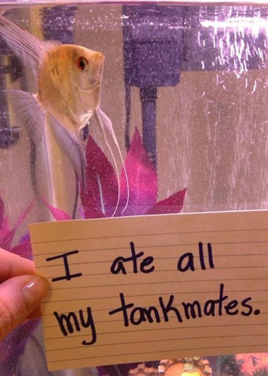 Fish Shaming