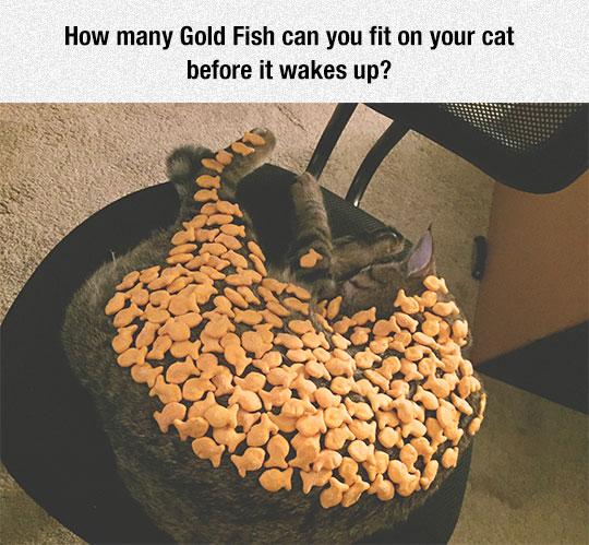 Gold Fish Challenge