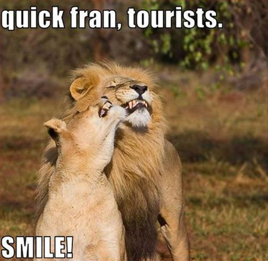 Quick, tourists!