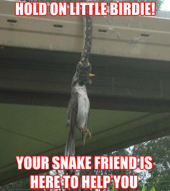 Good Guy Snake