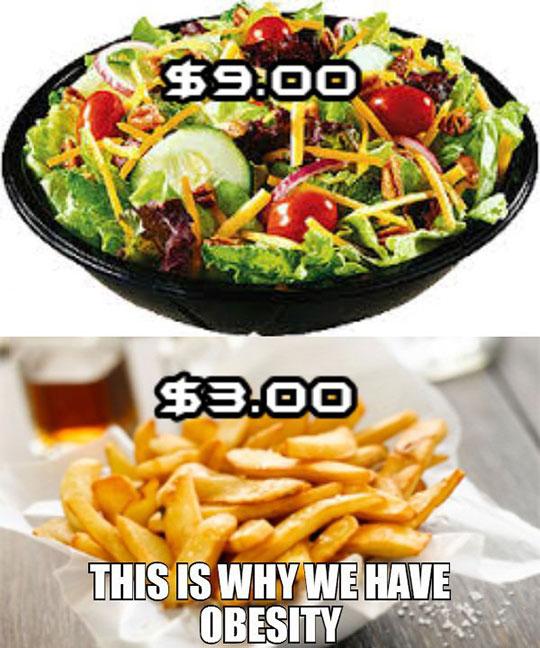 Obesity Explained