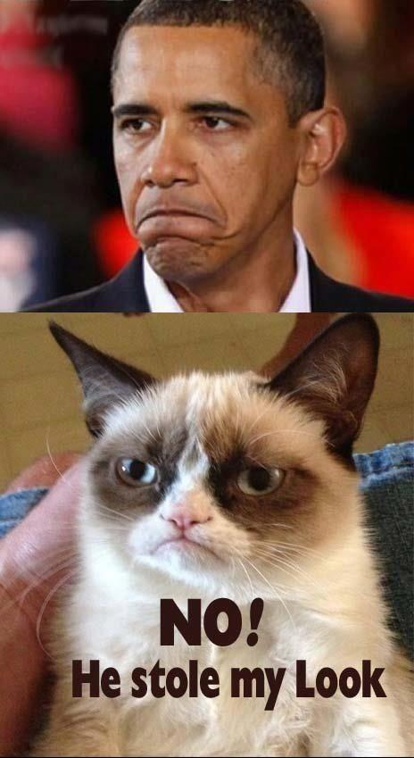 Grumpy Cat Not Happy