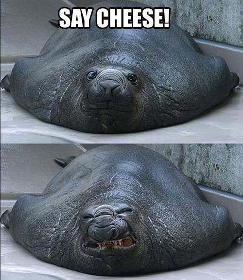 Cheeeese