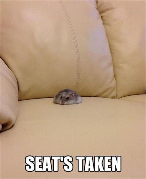 Seat's Taken