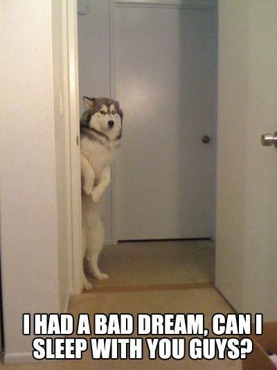 funny pics pictures pic picture image captions animals